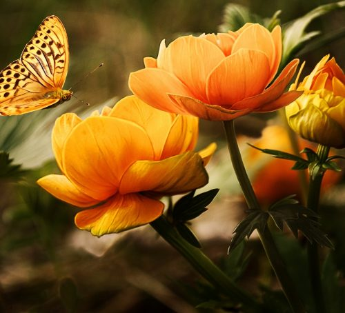 orange-flower-with-butterfly-87452